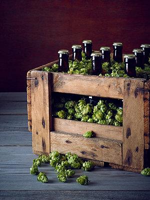 Bierflaschen im Holzkiste mit frischem Hopfen - p897m1183576 von MICK