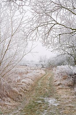 Winterwald - p2686967 von Christof Mattes
