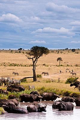 Kenya - p5330421 by Böhm Monika