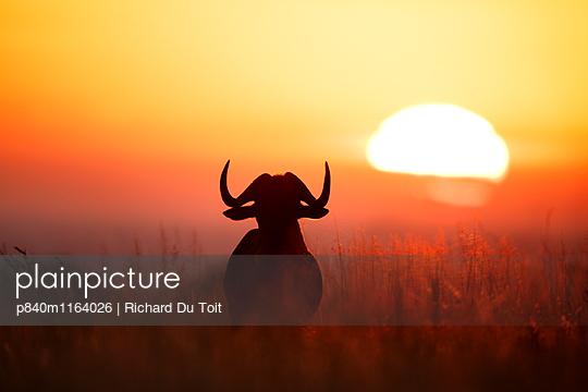 p840m1164026 von Richard Du Toit