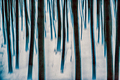 p1205m1515970 by Toni Anzenberger