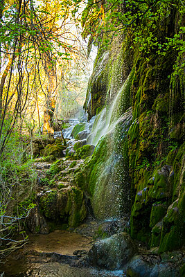 Moss covered rocks under Gorman Falls, Colorado Bend State Park; Texas, United States of America - p442m2074032 by Blake Kent