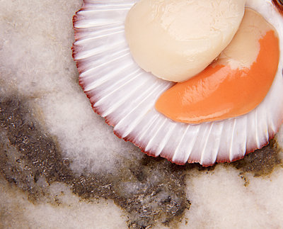 Overhead view of scallops in shell - p429m1179743 by Diana Miller