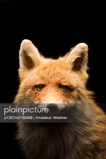p1357m2150498 by Amadeus Waldner