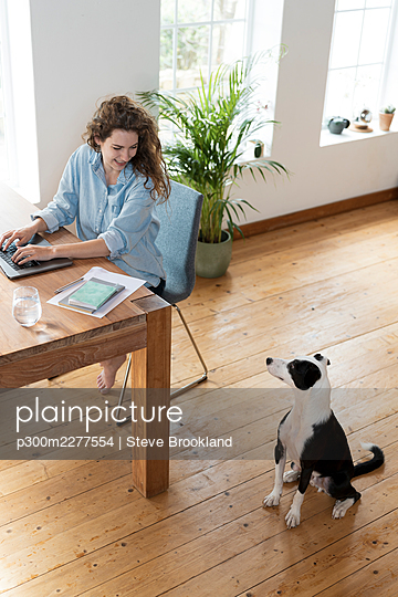 Smiling female professional looking at Jack Russell Terrier while working in home office - p300m2277554 by Steve Brookland