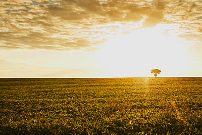 Field with tree and sun in the backlight - p1312m2284475 by Axel Killian