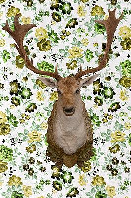 Deer - p4510745 by Anja Weber-Decker