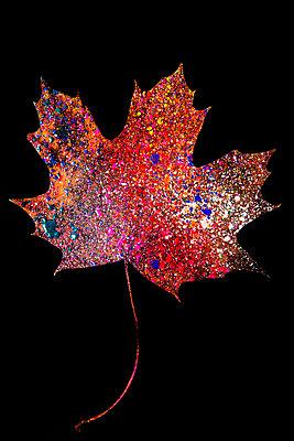 Getrocknetes Ahornblatt mit bunten Farbspritzern - p451m2164279 von Anja Weber-Decker