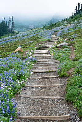 Wild flowers in the valley at Tipsoo Lake, in Mount Rainer national park - p555m1452707 by Spaces Images