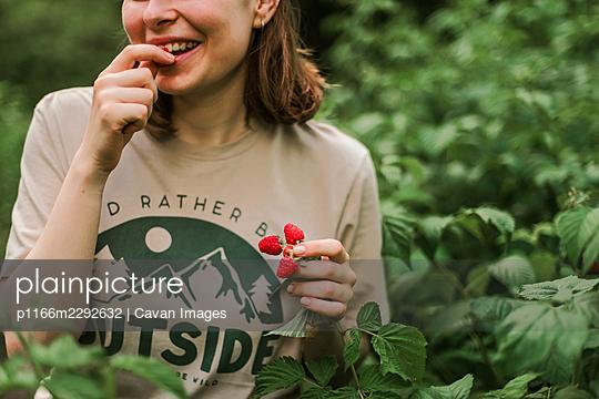 Hand picked freshly raspberries in garden - p1166m2292632 by Cavan Images