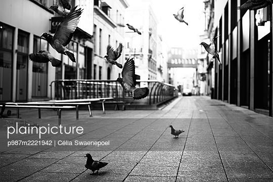 Envol de pigeons 01 - p987m2221942 by Célia Swaenepoel