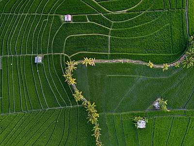 Indonesia, Bali, Aerial view of rice fields - p300m2042499 by Konstantin Trubavin