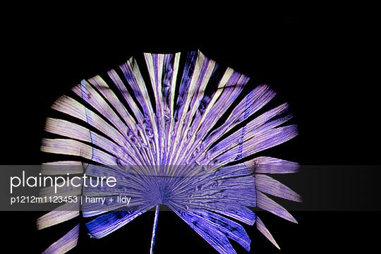Palmblattprojektion auf Oberkörper - p1212m1123453 von harry + lidy