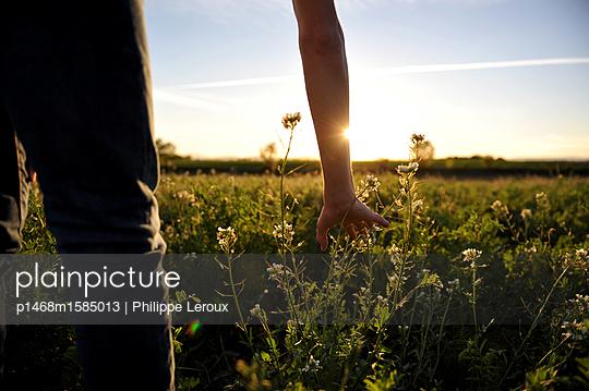 Sonnenaufgang über einem Feld - p1468m1585013 von Philippe Leroux
