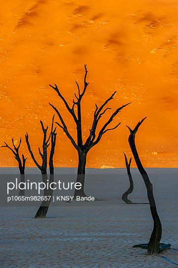 Tote Bäume in der Wüste, Sossusvlei, Namibia, Afrika - p1065m982657 von KNSY Bande