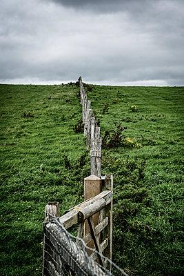 Pasture fence - p1170m2020134 by Bjanka Kadic
