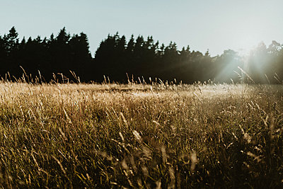 Meadow in backlit - p1184m2065092 by brabanski