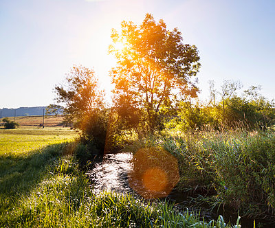 Sunlit landscape with tree's and stream - p429m1156082 by Henglein and Steets