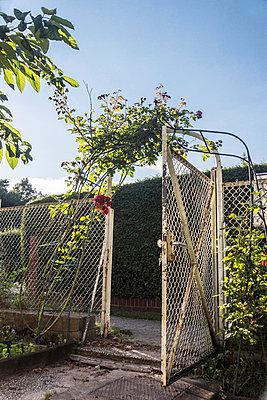Gartentor mit Rosenbogen - p739m916481 von Baertels