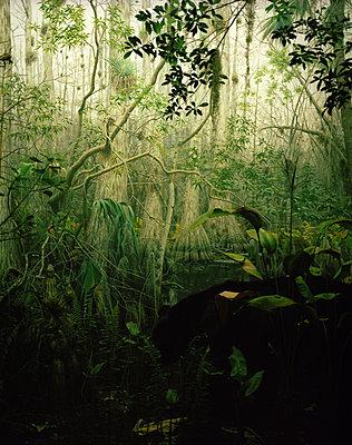 Fairytale forest - p945m1008143 by aurelia frey