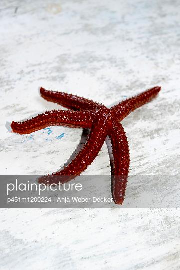 Roter Seestern - p451m1200224 von Anja Weber-Decker