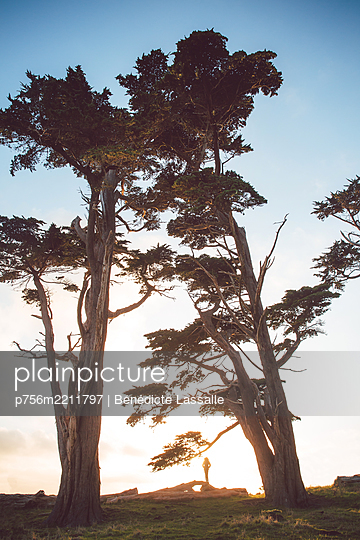 Trees at sunset, Point Reyes National Park - p756m2211797 by Bénédicte Lassalle