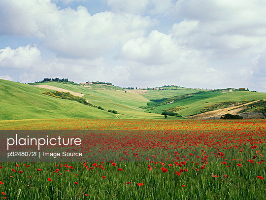 Poppy field in tuscany - p9248072f by Image Source