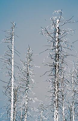 Dead trees - p971m1146681 by Reilika Landen