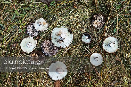 p1166m1151355 von Cavan Images