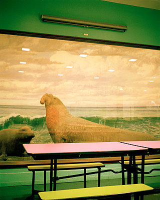 seating area with stuffed sea lion - p3880210 by Jim Green