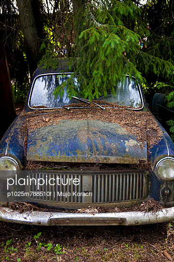 Abandoned car under a tree at the junkyard