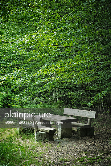 Picnic Area in Forest