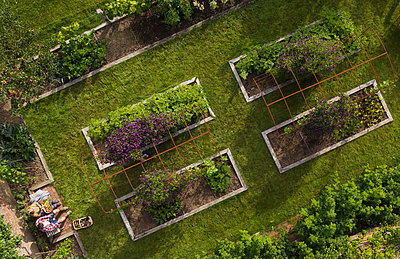 View from above couple in lush summer garden with raised beds - p1023m2261969 by Martin Barraud
