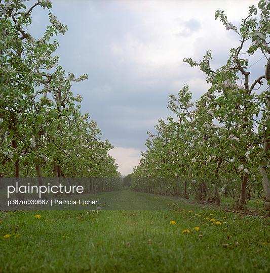 Fruit trees - p387m939687 by Patricia Eichert