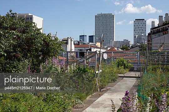 Roof community garden - p445m2125947 by Marie Docher