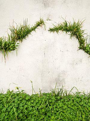 Bewachsene Fassade - p1021m2064044 von MORA