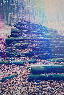 Rotten trunks - p1089m856008 by Frank Swertz