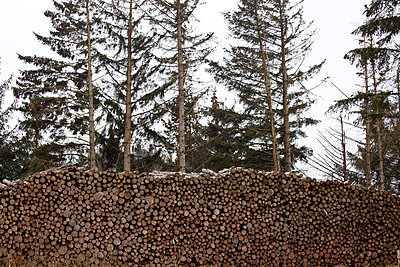 Logs - p4320912 by mia takahara