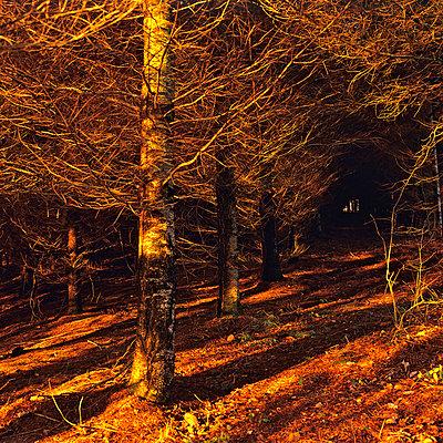 Undergrowth - p8130030 by B.Jaubert