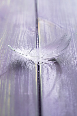 Single feather on wooden floorboard - p1228m1488527 by Benjamin Harte