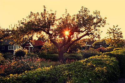 Summer garden - p312m1211145 by Emil Fagander
