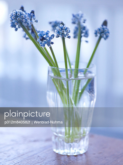 Blue flowers in vase, close-up