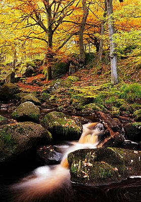 Padley Gorge, Peak District, Derbyshire, England, United Kingdom, Europe - p871m1107317 by Ben Pipe