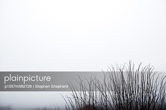 Hecke - p1057m982728 von Stephen Shepherd