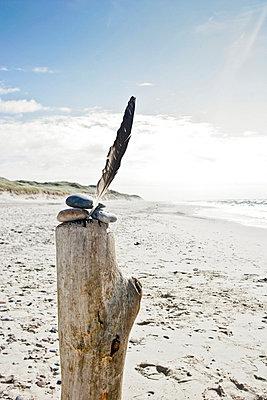 Still life on a beach in Denmark - p8530003 by th