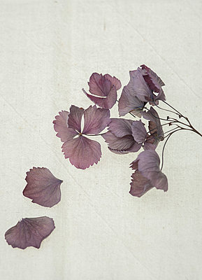 Dried flower - p971m1222605 by Reilika Landen