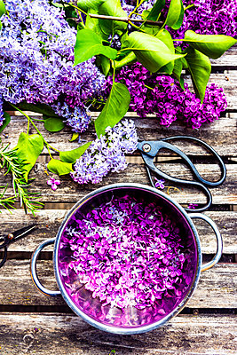 Preparation of lilac sirup, rosemary and lemon - p300m2103811 von Sandra Roesch