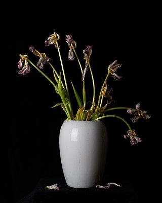 Blumen in Vase - p1088m1207334 von Martin Benner