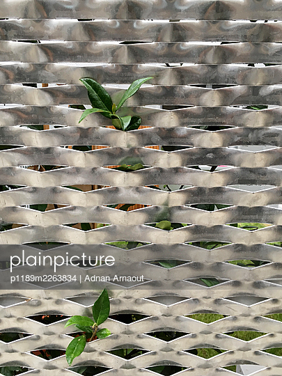 Plant and metal structure - p1189m2263834 by Adnan Arnaout