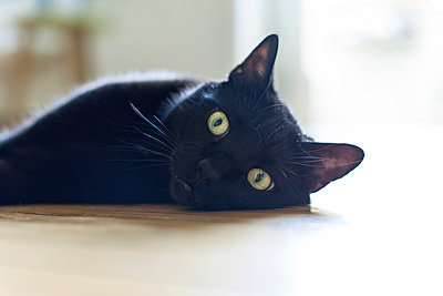 Katze die auf dem Fußboden liegt - p795m1064405 von Janklein